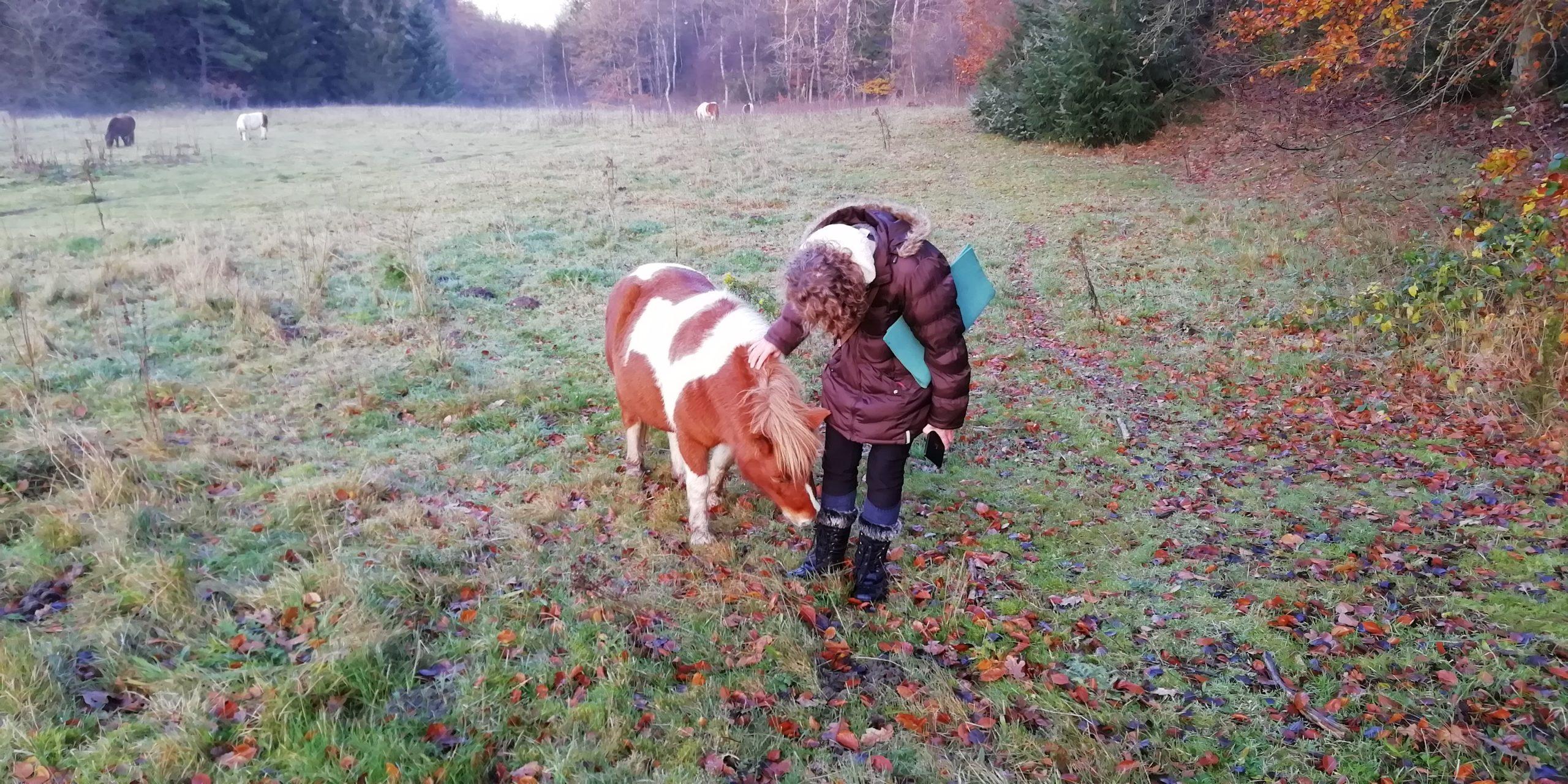 Introduktion til privat hjemmeside for Pia Bjerre Christensen. Foto fra Vejle Ådal i område med ponyer til naturpleje